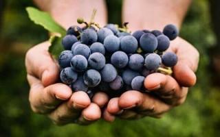 Можно ли виноград при грудном вскармливании?