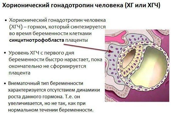 ХГЧ при беременности: норма по неделям