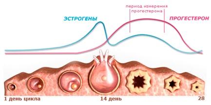 Когда нужно сдавать анализ на прогестерон?