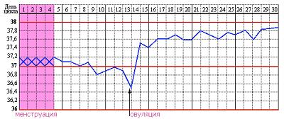 Как мерить базальную температуру для определения овуляции?