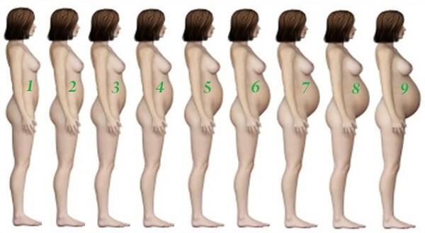 Как растет живот при беременности по неделям?